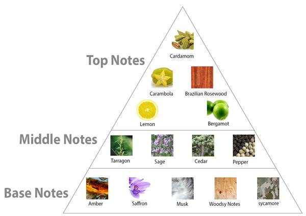 Perfume Notes